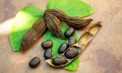 mucuna-pruriens-and-testosterone-a-source-of-l-dopa